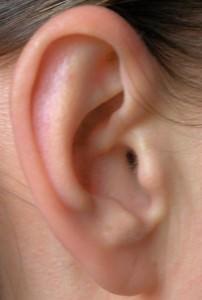 Außenohr mit Klang beeinflussendem Anthelix