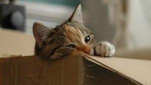 YouTube: Schnurrende Katze verletzt Urheberrecht