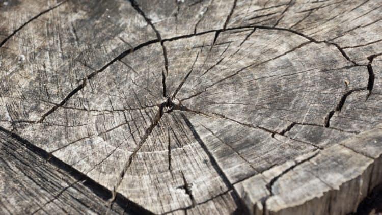 CITES II - Wie muss das Holz eines Instruments dokumentiert sein?