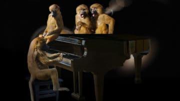 10 musikalische Haustiere